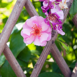fleurs terrasse